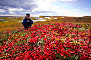 Inuit child on the tundra at the mouth of the Sepentine river near Shishmaref, Alaska, USA. September 2004  -  Ashley Cooper
