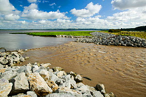 The Breach at Alkborough. This is a break in the sea defences flooding farmland to creating 150 hectares of wetland protecting urban Humber Estuary, Eastern England, UK August 2008 - Ashley Cooper