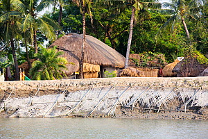 Coastal flood defences in the Sunderbans, a low lying area of the Ganges Delta in Eastern India, that is very vulnerable to sea level rise. The houses behind the embankment are lower than the high tid...  -  Ashley Cooper