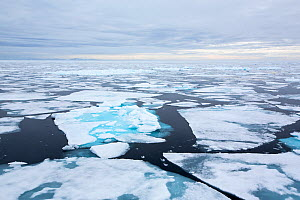 Rotten sea ice off the north coast of Svalbard, Norway July 2013  -  Ashley Cooper