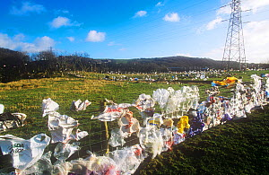Plastic bags blown from a landfill site in Barrow in Furness, Cumbria, England, UK. - Ashley Cooper