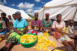 People displaced by the January 2015 flooding, preparing pumpkin flowers to eat, in Baani refugee camp near Phalombe, Malawi, March 2015. - Ashley Cooper