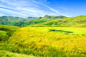 Upland tarn above the Langdale Valley, Lake District, England, UK, July. - Ashley Cooper