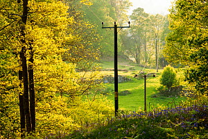 Electricity wires running through woodland near Ambleside in the Lake District, England, UK. May. - Ashley Cooper