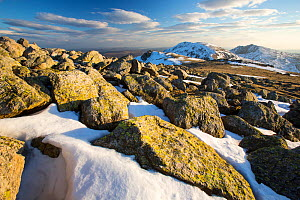 Lichen covered rocks on Swirl Howe, looking towards Dow Crag and Coniston Old Man. Above Wrynose, Lake District, Cumbria, England, UK, February 2013.  -  Ashley Cooper