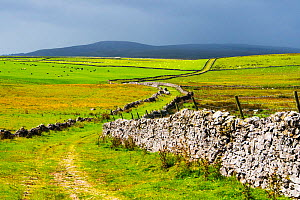 Mastiles Lane, an ancient green lane and drover's road in the Yorkshire Dales, England, UK. August 2014. - Ashley Cooper