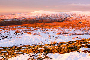 Looking towards Black Fell in the North Pennines, from Hartside, Cumbria, UK. January 2016. - Ashley Cooper