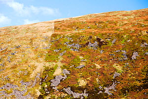 Example of how sheep grazing affects moorland vegetation. This shot is taken above Megget Reservoir near Broad Law in the Southern Uplands of Scotland. On the right of the fence is a nature reserve wh... - Ashley Cooper