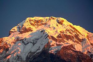 Alpenglow at sunrise on Annapurna South, Nepelese Himalayas, Nepal, December 2012. - Ashley Cooper