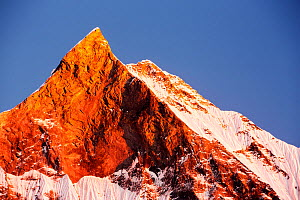 Alpenglow at sunset on Machapuchare, Annapurna Sanctuary, Nepelese Himalayas. December 2012.  -  Ashley Cooper