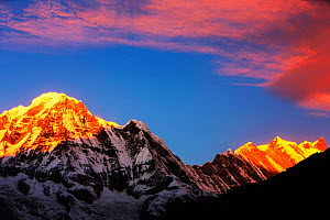 Alpenglow at sunrise on Annapurna South and Annapurna Fang, Nepal. December 2012.  -  Ashley Cooper