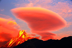 Alpenglow at sunset on Machapuchare, Annapurna Sanctuary, Nepelese Himalayas. Nepal, January 2013. - Ashley Cooper
