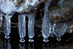 Icicles at edge of lake, Maryland, USA, February.  Focus stacked image. - John Cancalosi