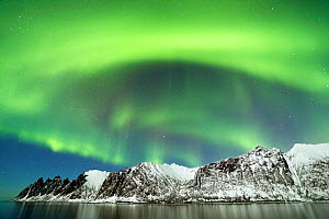 Northern lights over the coast of Senja, Norway, February - David Allemand