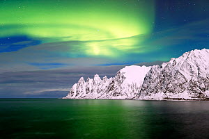 Northern lights over the coast of Senja, Norway, February. - David Allemand