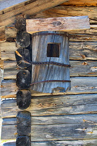 Old Goldeneye Nestbox crafted from a log and chained to the side of a lodge to protect it from Wolverines. Kaalimaa, Pokka, Inari, Lapland, Finland, June.  -  Roger Powell