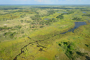 Aerial photograph of the Okavango Delta, UNESCO World Heritage Site, featuring, swamp, pools and channels created by Hippopotamus (Hippopatmus amphibious), Botswana. January 2018.  -  Will Watson