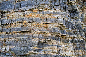 Outcrop of banded Chert, part of the Carboniferous, Pentre Chert formation, Halkyn, Wales, UK. January. The Chert is silicified Limestone, made up in part of micro organism Radiolaria. This is one of... - Graham Eaton