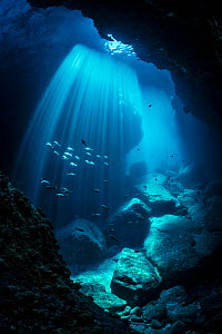 Schools of Pacific creolefish (Cephalopholis colonus) and Panamic sergeant major (Abudefduf troschelii) swimming through sun beams inside an underwater cavern. Los Islotes, La Paz, Baja California Sur... - Alex Mustard