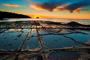 Tessellated pavement at sunset. Eagle Hawk Neck, Tasmania, Australia. Tasman Sea  -  Alex Mustard