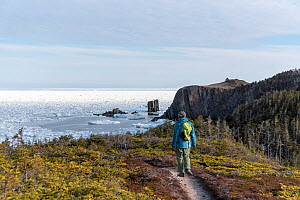 Man looking out to from the Skerwick Trail near Trinity, Newfoundland, Canada. Unusual May sea ice filling the bay. Canada, May, 2017. - Rhonda Klevansky