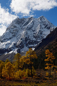 Autumn landscape in the U-shaped valley.  Snow covered mountain landscape and vegetation in autumn colours, Baima Snow Mountain Nature reserve, Yunnan, China, October 2017. - Staffan Widstrand / Wild Wonders of China