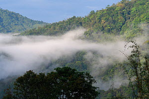Low lying cloud over rainforest,  morning in Sudian, Tongbiguan Nature Reserve, Dehong Prefecture, Yunnan province, China, May. - Staffan Widstrand / Wild Wonders of China
