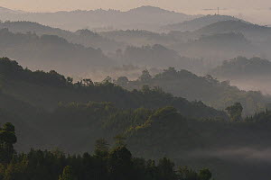 low lying morning fog /mist over Tongbiguan Nature Reserve, Dehong Prefecture, Yunnan province, China, May 2017. - Staffan Widstrand / Wild Wonders of China