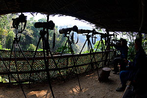 Cameras set up in Great hornbill hide platform, Tongbiguan Nature Reserve, Dehong Prefecture, Yunnan Province, China, April 2017. - Staffan Widstrand / Wild Wonders of China