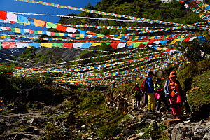 Buddhist prayer flags along  the pilgrimage route around Meili Snow Mountain, 6740 m, a Sacred mountain for Tibetan Buddhists, as yet unclimbed, at the waterfall near Yubeng, Yunnan, China, October 20...  -  Staffan Widstrand / Wild Wonders of China