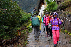 Hikers walking down the hill  in the Upper Yubeng village, Meili Snow Mountain National park, Yunnan, China. October 2017. - Staffan Widstrand / Wild Wonders of China