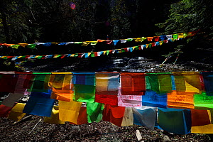 Buddhist Prayer flags, the pilgrimage route around Meili Snow Mountain, 6740 m, a Sacred mountain for Tibetan Buddhists, yet unclimbed, Yunnan, China, October 2017.  -  Staffan Widstrand / Wild Wonders of China