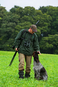 Estate ranger out with gun and dog to control Roe deer (Capreolus capreolus) populations to a  level where their browsing does not prevent native woodland tree species from regenerating, Devon, Englan...  -  Matthew Maran