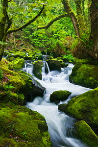 Golitha Falls, River Fowey, Bodmin Moor, Cornwall, England, UK. May 2010. - Guy Edwardes