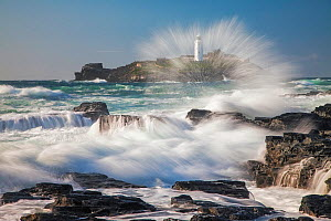 Godrevy Lighthouse, Hayle, Cornwall, England, UK. September 2012.  -  Guy Edwardes