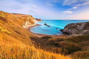 Man O' War Cove, St Oswald's Bay, Jurassic Coast, Dorset, England, UK. December 2013. - Guy Edwardes