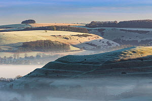 Dawn mist around Hambledon Hill from Bullbarrow Hill, Cranbourne Chase, Dorset, England, UK. February 2016. - Guy Edwardes