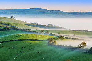 Pilsdon Pen and Marshwood Vale in morning mist, Quarr Hill, Dorset, England, UK. May 2014. - Guy Edwardes