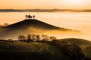 Colmer's Hill in mist, Bridport, Dorset, England, UK. May 2014. - Guy Edwardes