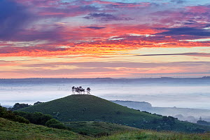 Sunrise over Colmer's Hill, Bridport, Dorset, England, UK. June 2010. - Guy Edwardes