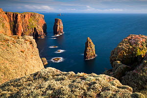 Lichen covered cliffs at Eshaness, Shetland, Shetland Isles, Scotland, UK. August 2014.  -  Guy Edwardes