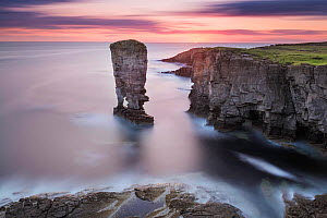 Yesnaby Stack, Orkney, Orkney Islands, Scotland, UK. August 2014. - Guy Edwardes