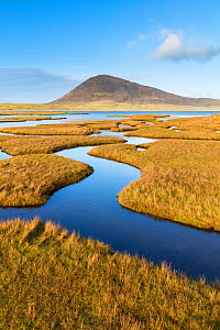 Saltmarsh on the Isle of Harris, Outer Hebrides, Scotland, UK. November 2016.  -  Guy Edwardes