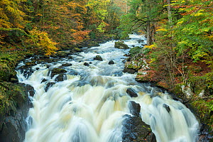 River Braan at Black Linn Falls, The Hermitage, Dunkeld, Perthshire, Scotland, UK. October, 2013.  -  Guy Edwardes