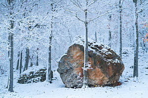 Beech (Fagus sylvatica) woodland with large boulder in snow, Sierra Cebollera Natural Park, La Rioja, Spain. November, 2017.  -  Juan  Carlos Munoz