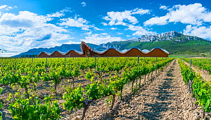 Vineyard with building designed by Santiago Calatrava and Sierra De Cantabria mountains in background. Laguardia, Alava, Basque Country, Spain. May, 2017. - Juan  Carlos Munoz