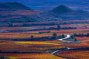 Vineyards in autumn, La Rioja, Sierra De Cantabria, Alava, Basque Country, Spain. November 2017.  -  Juan  Carlos Munoz