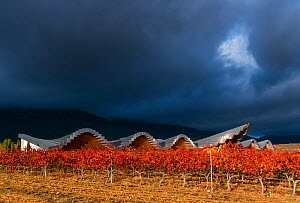 Vineyard in autumn, Ysios Winery with building designed by Santiago Calatrava, La Rioja, Sierra De Cantabria, Alava, Basque Country, Spain. November 2017.  -  Juan  Carlos Munoz