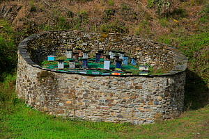 Bee hives kept in walled area to deter bears, Muniellos National Park, Asturias, Spain. October - Andres M. Dominguez