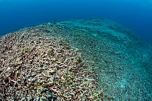 Coral reef reduced to rubble by dynamite fishing. Ambon, Maluku Archipelago, Indonesia. Banda Sea, tropical west Pacific Ocean. November, 2017.  -  Alex Mustard